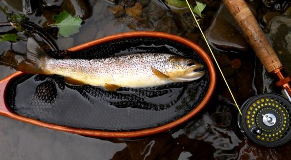 Fine Cedar Brown 2012-930Hpix