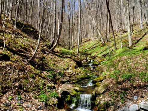 Spring Runoff-SC750H.jpg